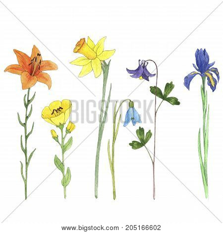 Set of watercolor drawing flowers, lily, iris, snowdrop and narcissus, painted botanical illustration, isolated color floral elements, hand drawn illustration