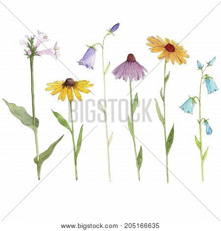 Set of watercolor drawing flowers, Hosta, rudbeckia and bells, painted botanical illustration, isolated color floral elements, hand drawn illustration