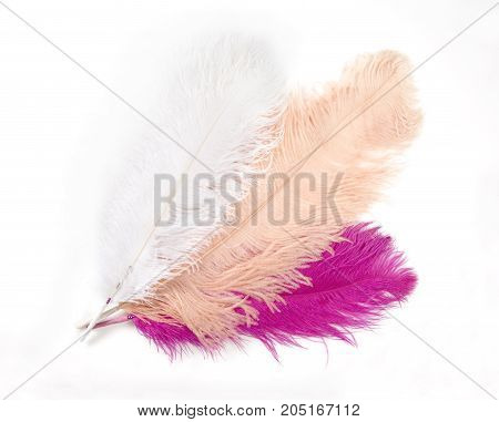 Colorful Artificial Feathers Shot on White Background