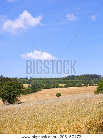 Landscape with a Field of Wheat in Bohemia