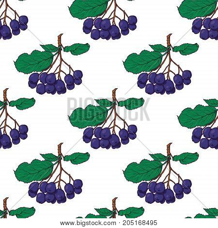 Hand drawn seamless pattern with hanging bunches of chokeberry, black rowan berries, sketch style vector illustration on white background. Chokeberry seamless pattern, backdrop, textile design