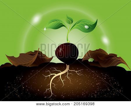 Green sprout growing from seed.The seed is germinate.
