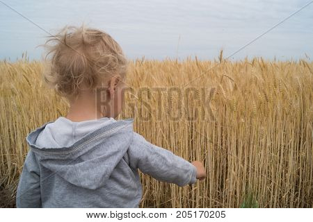 Little boy stands next to the wheat field