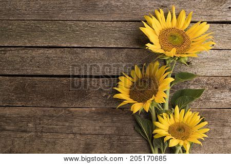 Sunflowers on the old wooden background. Space for text.