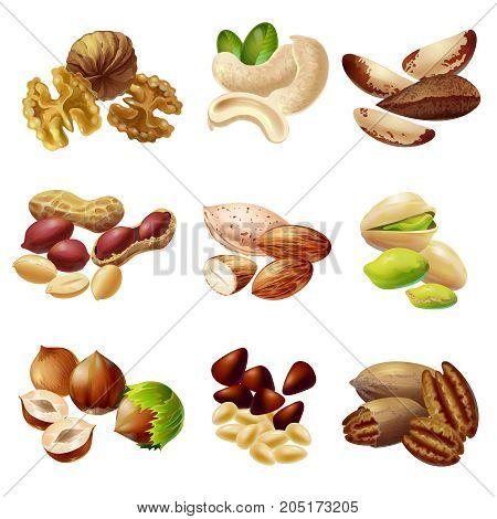 Cartoon healthy nuts set with walnut cashew almond hazelnut pecan pistachio peanut brazil pine nuts isolated vector illustration