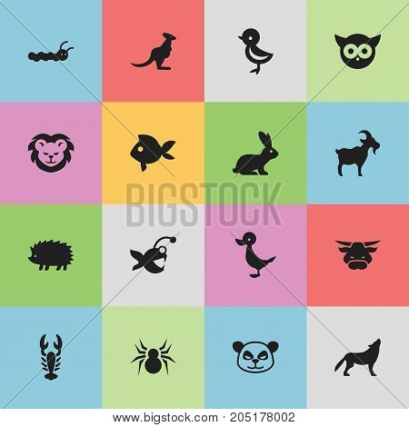 Set Of 16 Editable Zoology Icons. Includes Symbols Such As Wallaby, Night Fowl, Ox And More