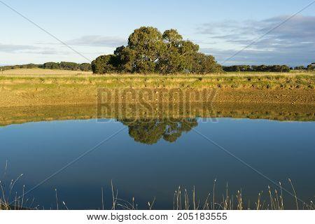 Random farm land dam in the Fleurieu Peninsula South Australia reflecting tthe tree and bank in the still water.