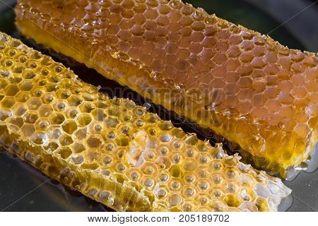 Close view of two pieces of honeycomb