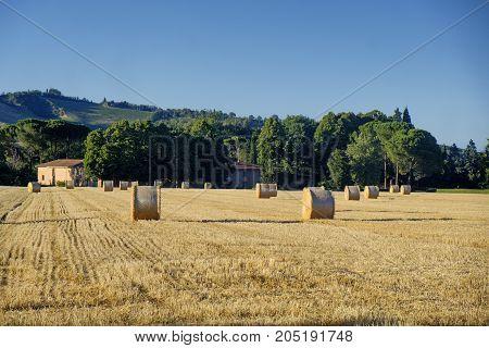 Country landscape between Riolo Terme and Brisighella (Ravenna Emilia Romagna Italy) at summer.