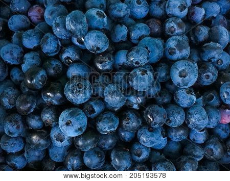 Organic, Freshly picked blueberry background from above