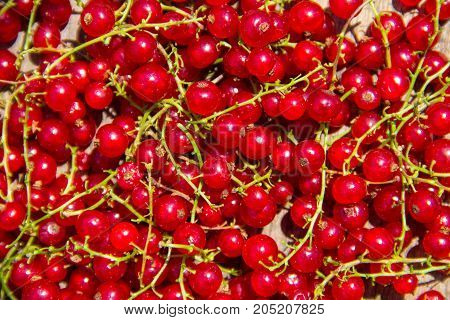 Fresh sweet ripe red currant for background