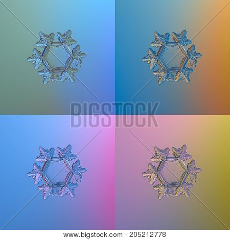 Set with four color variants of real snowflake, glittering on smooth gradient background: small snow crystal of star plate type with six short, glossy arms and big, flat central hexagon.