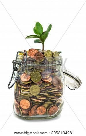 Saving Coins Concept money in the jar with growing plant