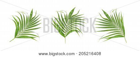set green leaf of palm tree isolated on white background