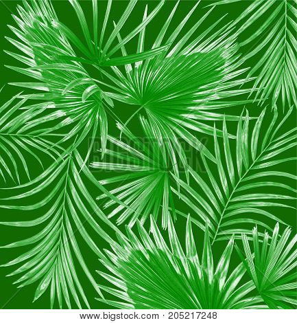 mix green leaves of palm tree background