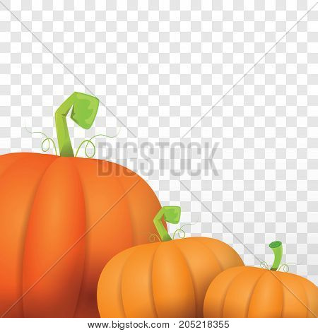 autumn vector orange pumpkins border design template for banners and thanksgiving day backgrounds. vector Pile of pumpkins frame isolated on isolated on transparent background