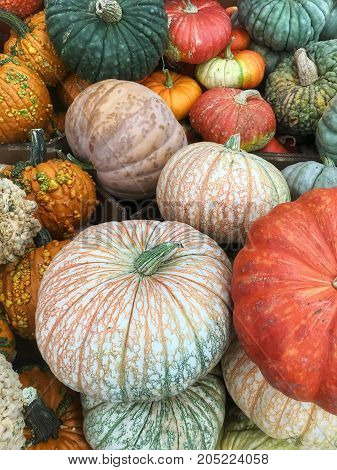 Pile of pumpkins and gourds for Halloween and fall