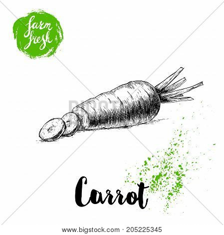 Hand drawn sketch style carrot with slices poster. Vintage looking root isolated on white background. Vector vegetables illustration.