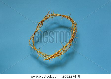 Yellow Crown Of Thorns On A Blue Background Top View