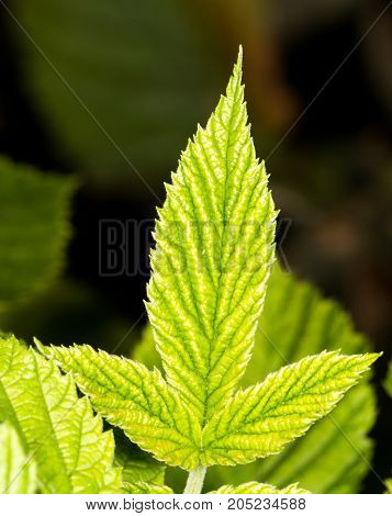 beautiful green leaf in nature . In a park in the nature