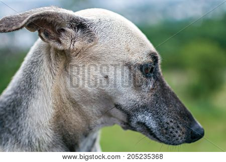 Close up of a dog looking down.
