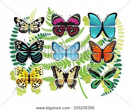 Tropical butterflies species of bright colors and with various patterns on leaves as background vector illustrations set.