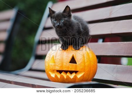 black kitten posing with a carved pumpkin
