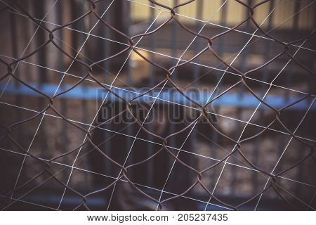 Metal mesh rabitz background. Blurred background primates in a cage. Zoo.