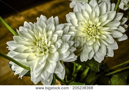 Bouquet with large inflorescences of white dahlias in a vase on a table