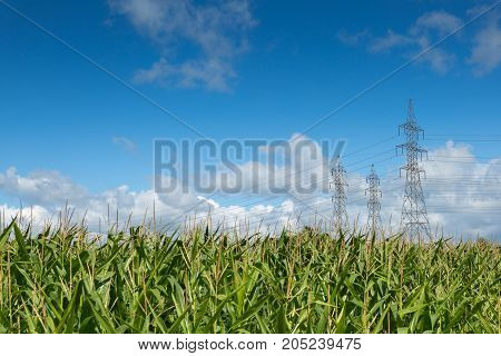 Three electric pylons with electric wires in a corn field with blue shy and white clouds