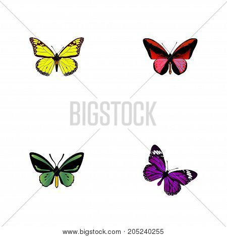Realistic Butterfly, Callicore Cynosura, Archippus And Other Vector Elements