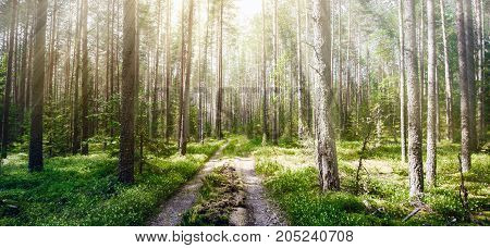 Forest road. Wild plants and trees background