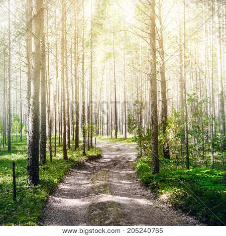 Road in summer forest. Green ecology background
