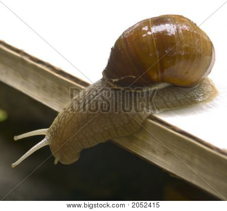 Snails in a court yard of a summer residence. poster