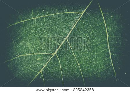 Retro background of a leaf with light vignetting