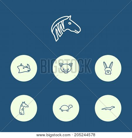 Collection Of Turtle, Mammal, Rhino And Other Elements.  Set Of 7 Alive Outline Icons Set.