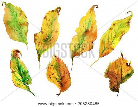 Collection of hand drawing watercolor beautiful yellow autumn leaves