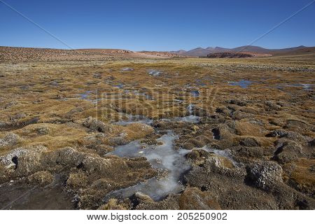 Frozen pools in a wetland along a tributary of the River Lauca high on the Altiplano of northern Chile in Lauca National Park.