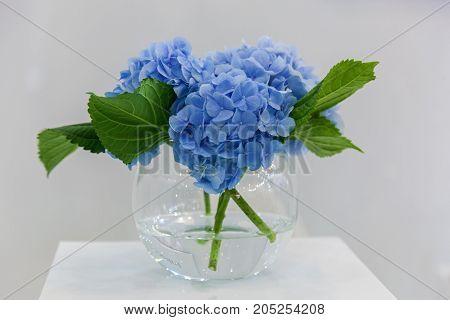 bouquet of blue hydrangea flowers in a vase on a pedestal