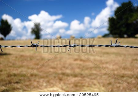 Barbed Wire closeup