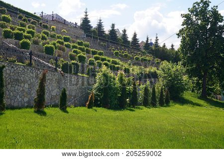 Stone wall with green bushes. Landscape design. Texture of nature. Background for text, banner, labels