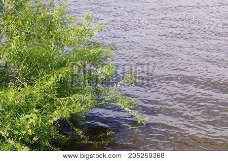 Water with greens. Texture of nature. Background for text, banner, label