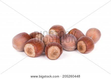 Useful Forest Nuts Hazelnut Isolated On White Background