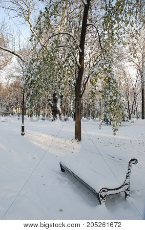 beautiful bench in a beautiful park under the snow in winter