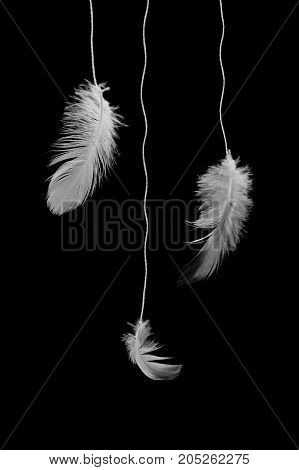 Feathers on a string on a black background. Abstract black and white photo with feathers