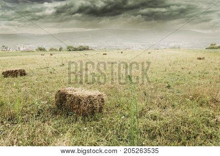last hay bundles laying on green field