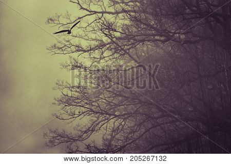 Hawk flying next to a tree. Foggy, Yellow purple split toning