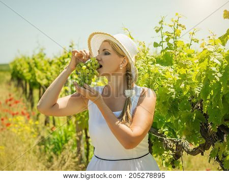 Woman in hat holding a ripe bunch of grapes on a Sunny day. Portrait of a beautiful woman in grape field.