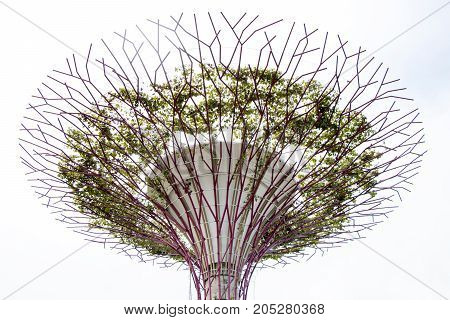 Singapore May 9 2017 - Supertrees at the Gardens By The Bay with blue sky with white cloud background