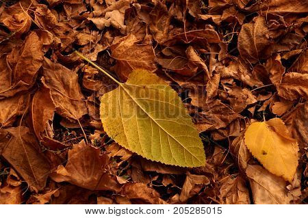 Autumn etude from the fallen-down yellow and brown leaves